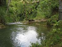 Almagosa River near Agat, Guam